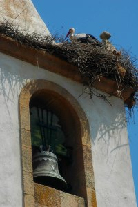 Stork i kirketårn